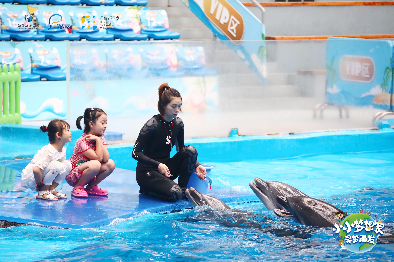 四川又添新物种,8只海狗安家成都海昌极地海洋公园