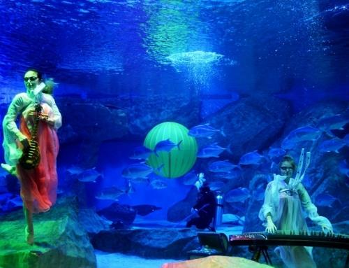 青岛海昌极地海洋公园推出中秋节重磅优惠,还有奇幻的《水下嫦娥奔月秀》