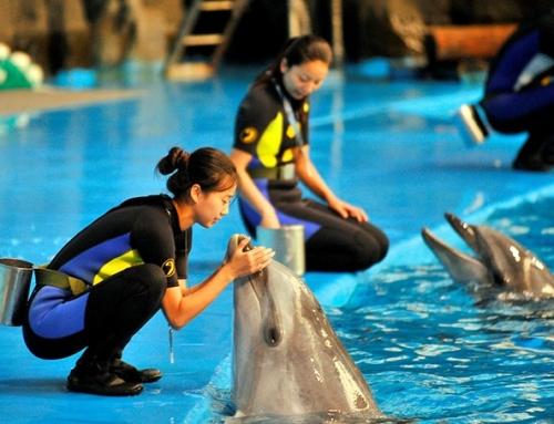"""临港新片区一周年,上海海昌海洋公园与临港共画""""鲸""""彩!"""
