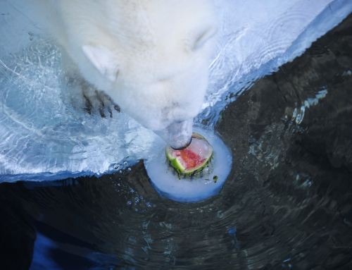 """天津海洋馆""""冰GO海洋节""""暑期放大价,儿童仅需9.9!"""