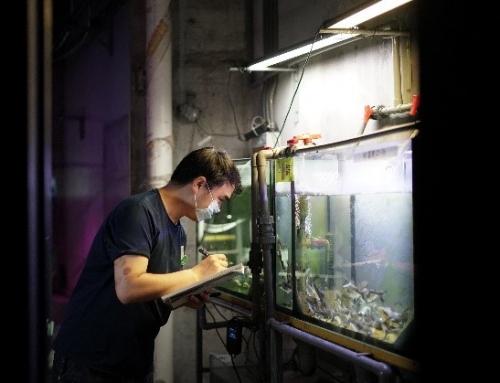 暖心!天津海昌极地海洋公园收容救助国家一级保护动物长丝𩷶