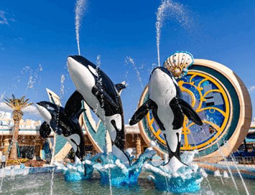 关于上海海昌海洋公园暂停开放的公告
