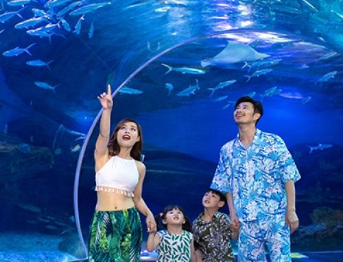武汉海昌极地海洋公园门票价格调整公示