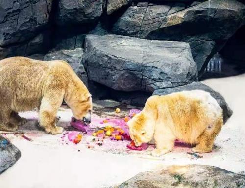 北极熊吃200斤冰皮月饼,海底嫦娥奔月,武汉海昌花样庆中秋