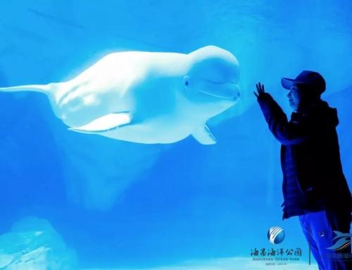 萌翻!鲸鲨海洋公园迎来绿海龟宝宝诞生啦~